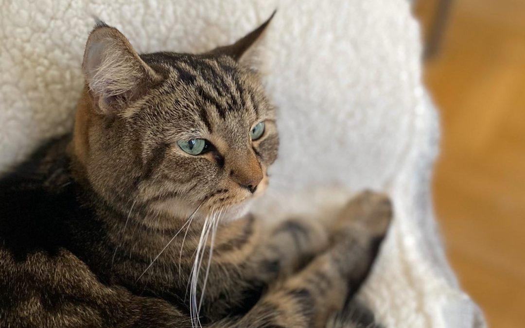 Un premier chat à la maison